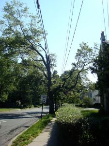 Y-tree in Princeton (Click to expand)