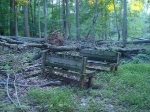 These benches built by the Scouts of Troop 43 are rotting away and slowly falling apart in the wild environment of Autumn Hills Reservation (click to expand.)