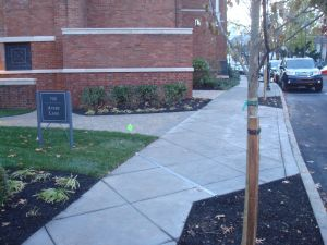New trees on Paul Robeson Place, with fresh mulch and covered in tree wrap. (click to expand.)