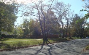 Homes on Jefferson Road in Princeton. (click to expand.)