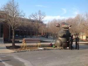 Union men inspect their giant rat outside the 400 Witherspoon municipal building in Princeton on Monday night, March 10, 2014. (click to expand.)