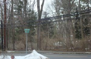 Krugman may yearn for Zabars in the Village, but Rosedale Road offers several good-sized trees, telephone wires AND a red fire hydrant. (Click to expand.)