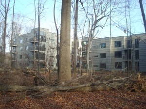 Trees surrounding Copperwood apartments. (click to expand.)