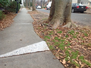 Smoothed sidewalk in Princeton, December 2014. (click to expand.)