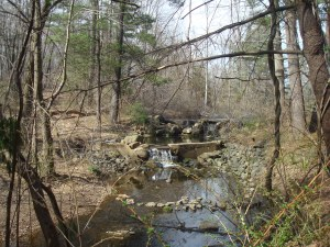 Scenic beauty in Princeton's  Woodfield Reservation, April 13, 2014. (click to expand.)